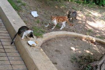 В Ужгороде зафиксировано кошачье бешенство.