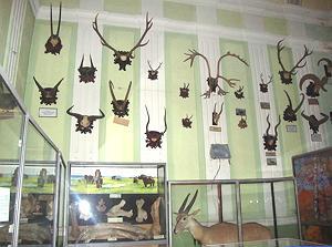 В зоологическом музее Ужгородского национального университета