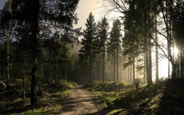 «Лісовий майдан» розкручується штучно групою олігархів.