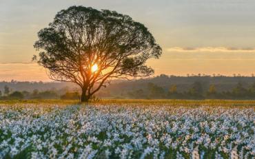 Туристы, которые уже увидели весеннее чудо, делятся фотографиями в соцсетях