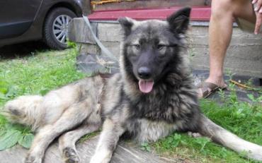 Харків'янин за пляшку відправив свого пса на смерть