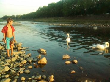 В Ужгороде два десятка ребят пришли полюбоваться на пару белоснежных лебедей