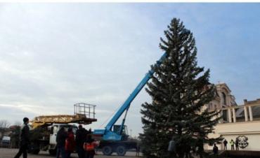 В городе Ужгороде на площади Театральной уже появилась новогодняя елка
