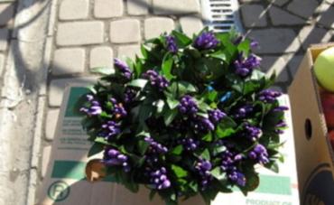 Перед центральным входом Зеленого рынка на коробке стоит миска с первоцветами