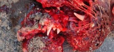 На Свалявщине мужик сбил чупакабру, выбежавшую на трассу
