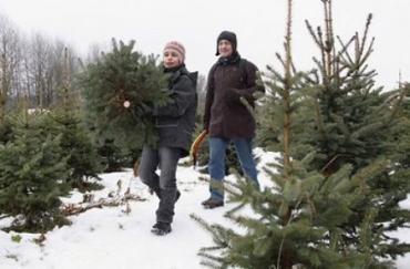 В Закарпатье милиция изымает незаконно срубленные елки