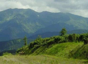 """Заказник """"Холмовецкая гора"""" на территории лесного фонда Закарпатья"""