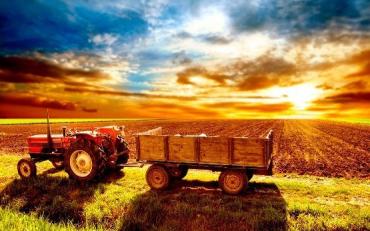 """Закарпатье заняло последнее место в рейтинге """"Сельское хозяйство"""""""