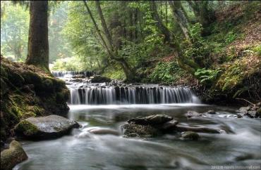 Вырублен приватизированный лесной участок у водопада Шипот
