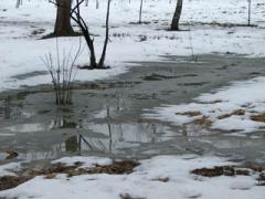 В пятницу, 10 апреля, в Украине весна ощутит дыхание зимы