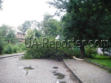 В областном центре Закарпатья упало дерево