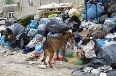 У Львові переповнених відходами майданчиків у місті нараховується понад 300 штук