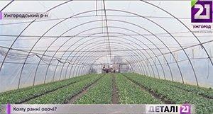В парниках выращивают огурцы, помидоры и редис