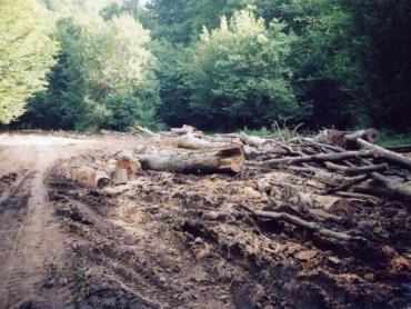 Чиновники Закарпатья заботятся только о своем кармане при вырубке леса