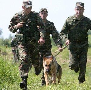 Пограничники с собакой задержали нелегалов в 100 метрах от границы Закарпатья