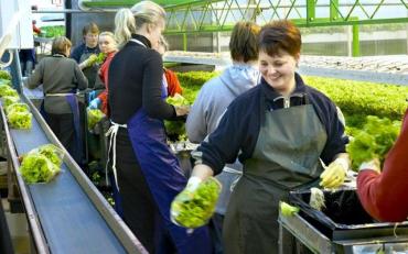 Чехія хоче видавати трудову карту для українців на сезонну роботу