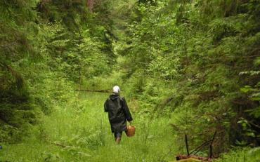На Закарпатті приїжджих грибників били всім селом