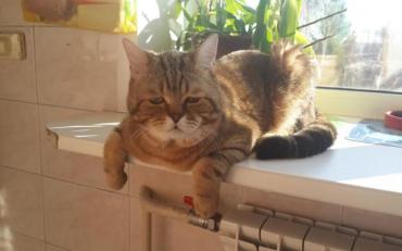 Кіт ціною життя врятував бабцю та онучку