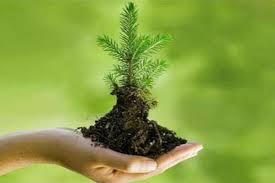 Уже проведено лесовосстановление на территории 1164 га