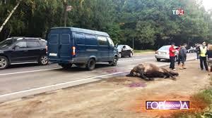 В результате ДТП водитель автомобиля не пострадал, а вот лошадка погибла