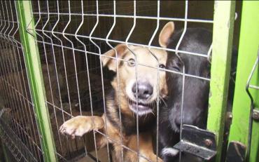 Любителі познущатися над тваринами відтепер відповідатимуть перед законом