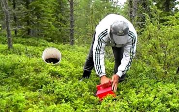 37 українських робітників, які зникли у Фінляндії, нарешті знайшлися