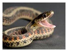 Якщо змія буде кусати, то вона прокусить тільки тканину штанів, а не шкіру