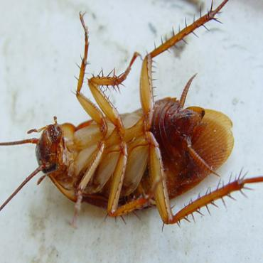 Тараканы не любят старые стандарты GSM и GPRS