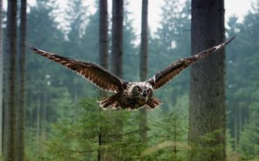 У мережі показали з висоти пташиного польоту – озеро Синевір