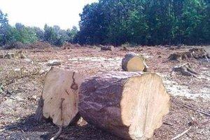 По приблизительным подсчетам вырубали около гектара леса