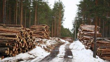 Польша, Словакия и Румыния — уже прекратили вырубку леса в Татрах и Карпатах