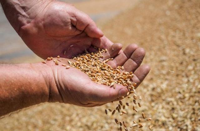 Украина за 5 дней израсходовала квоты наэкспорт пшеницы вЕС