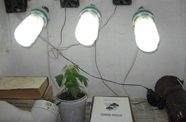 Выращивание конопли в инкубаторе пермь конопля